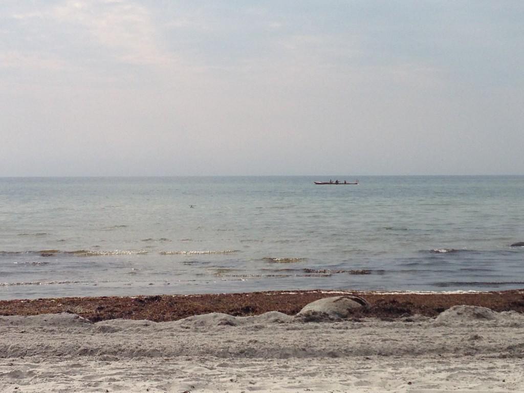 Fra strandkanten ser man ofte robåde fra den lokale roklub i Faxeladeplads
