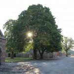 Lindetræ på gårdspladsen
